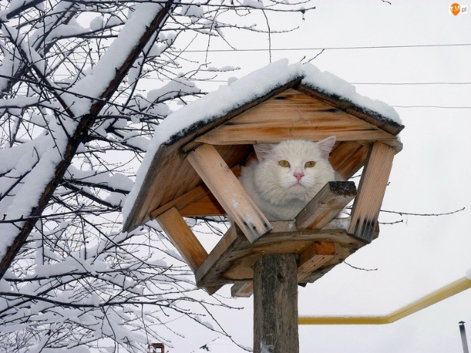 Spring is coming, cats are flying back...
