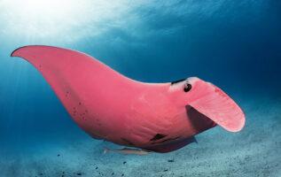 amazing underwater photographs