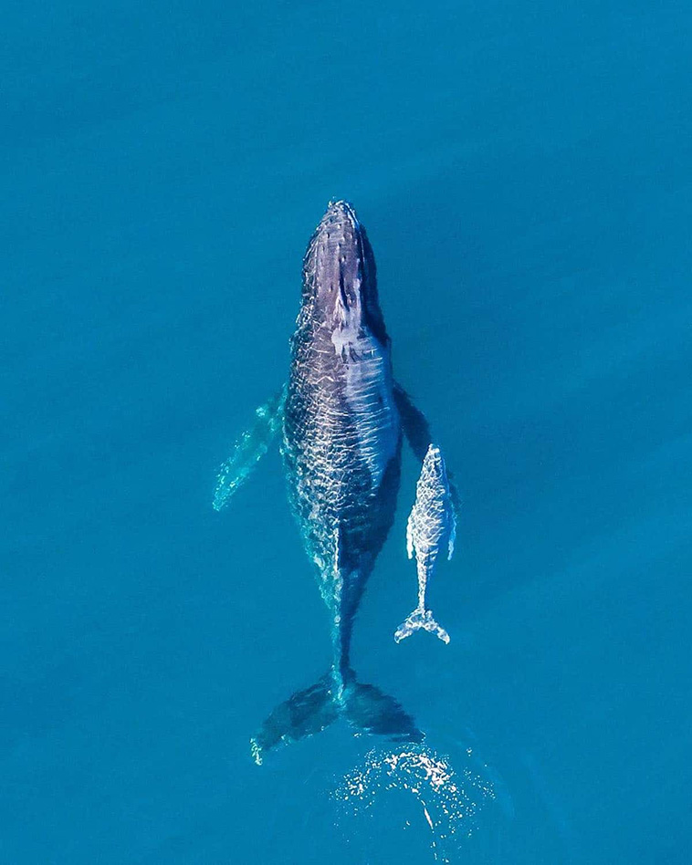 mother and cub whale