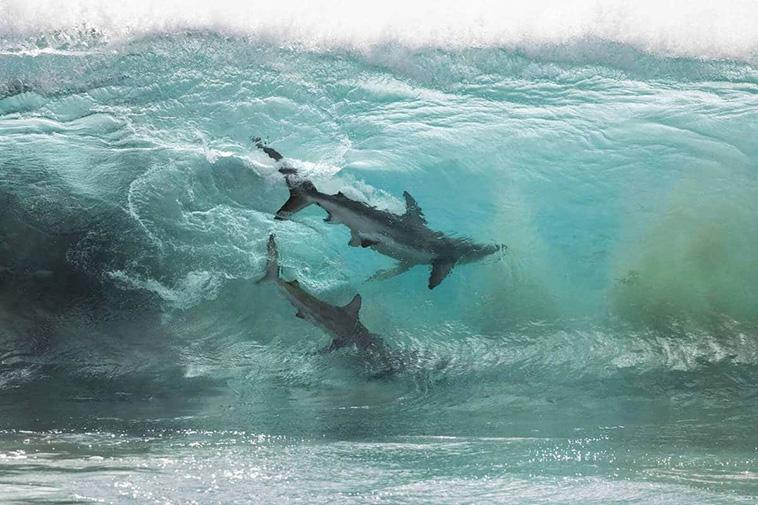shark photography