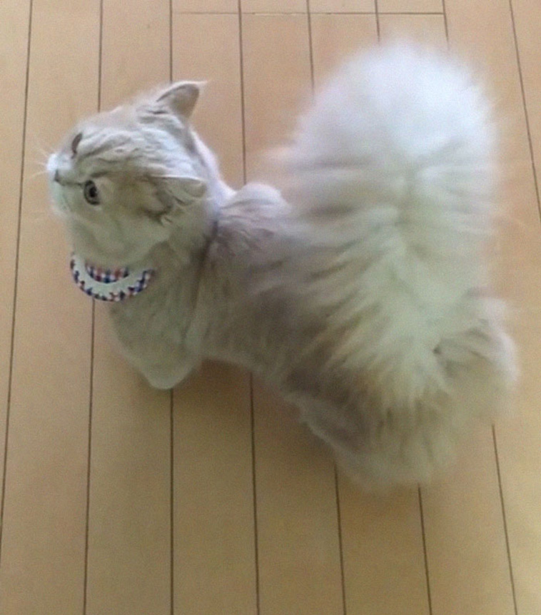 fluffy tail