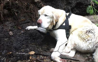 missing blind dog found