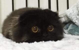 gimo-the-cat-big-cute-eyes-5