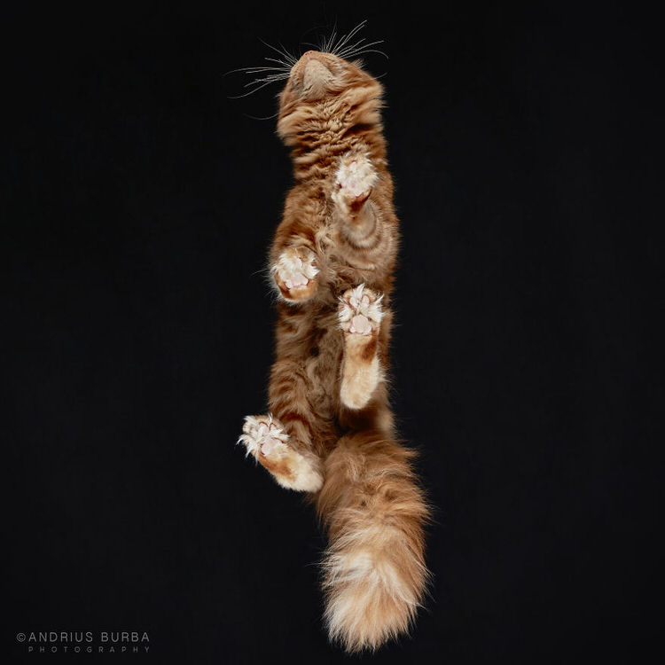 under-cats-11