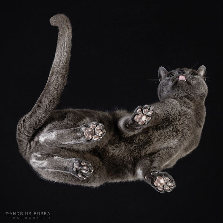 under-cats-7