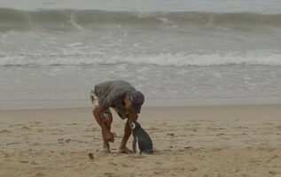 Say hello to Dindim, the penguin who swims 8,000 km every year to meet the man who saved his life