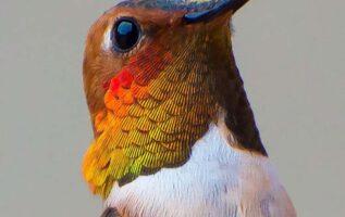 hummingbird-photography-by-tracy-johnson-14