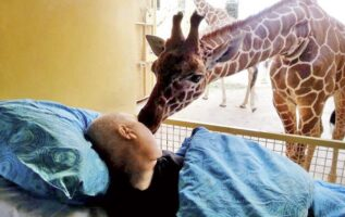 TOUCHING: Dying zoo worker gets goodbye kiss from giraffe   KANNADIGA WORLD