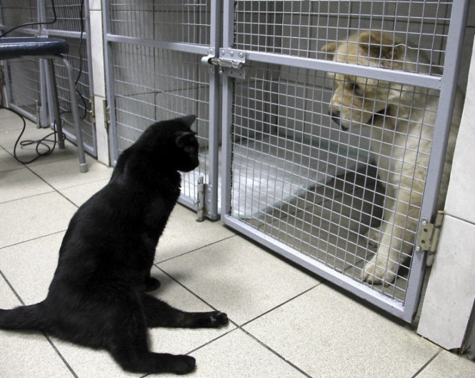 Paralyzed Rescue Cat Drags Himself Around To Cuddle Sick Dogs At The Vet Clinic That Saved His Life
