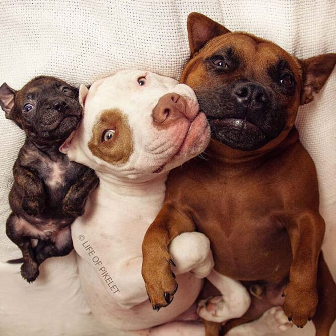 rescued-dogs-potato-1