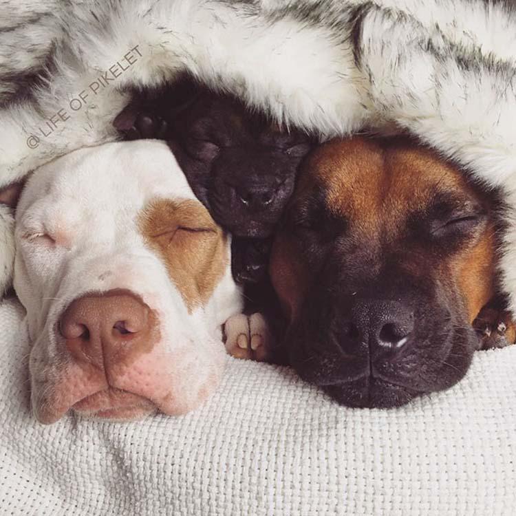 rescued-dogs-potato-10