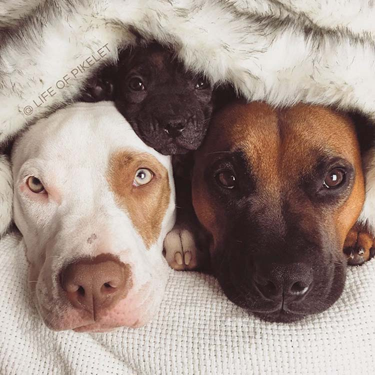 rescued-dogs-potato-3