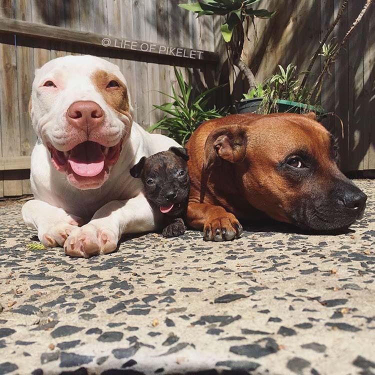 rescued-dogs-potato-4
