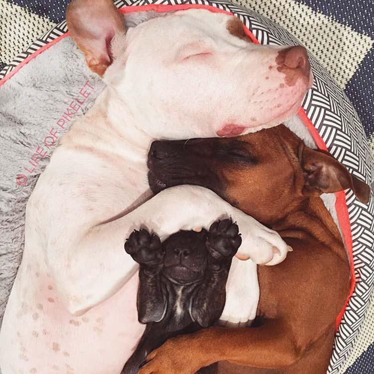 rescued-dogs-potato-5