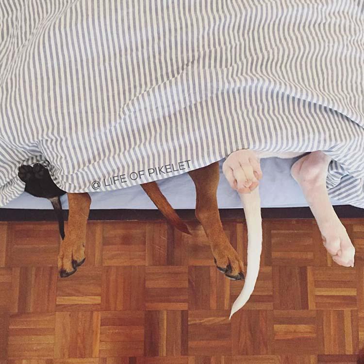 rescued-dogs-potato-6