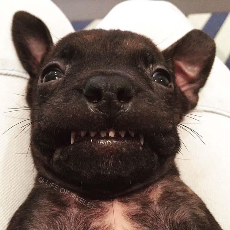 rescued-dogs-potato-9