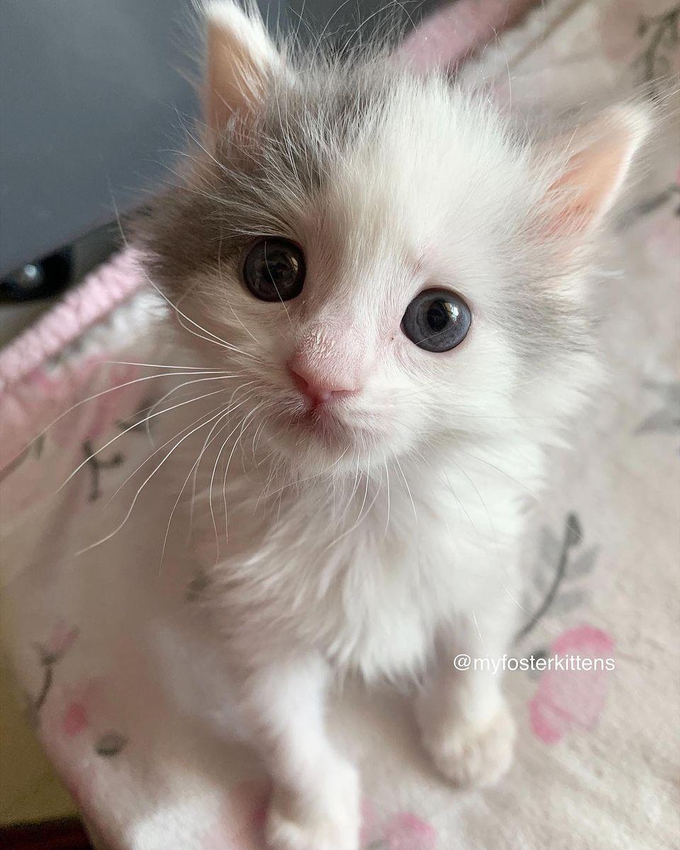 Adorable gatita blanca