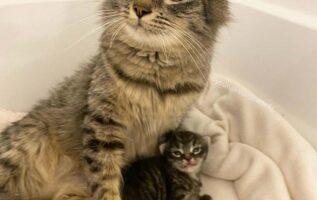 Adorables gatitos rescatados
