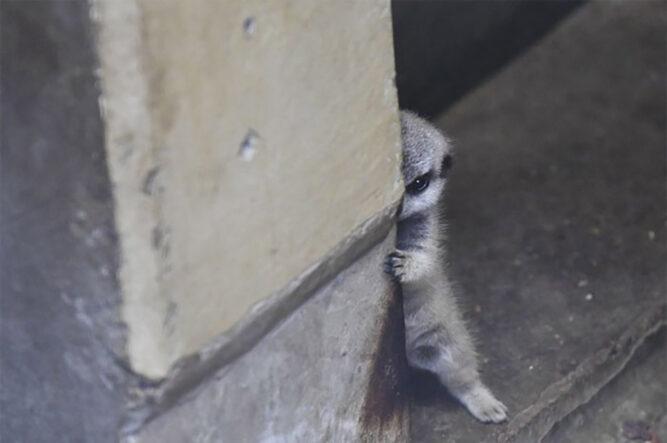 Bebé asomado por una esquina
