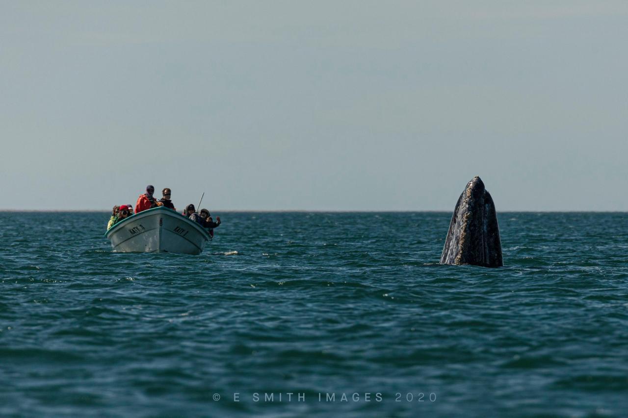 Fascinante ballena