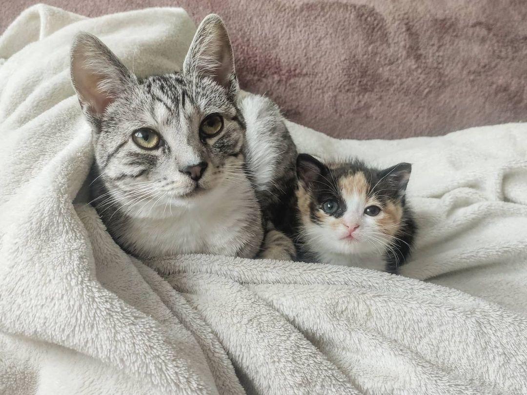 Gata acoge a una pequeña gatita encontrada sola