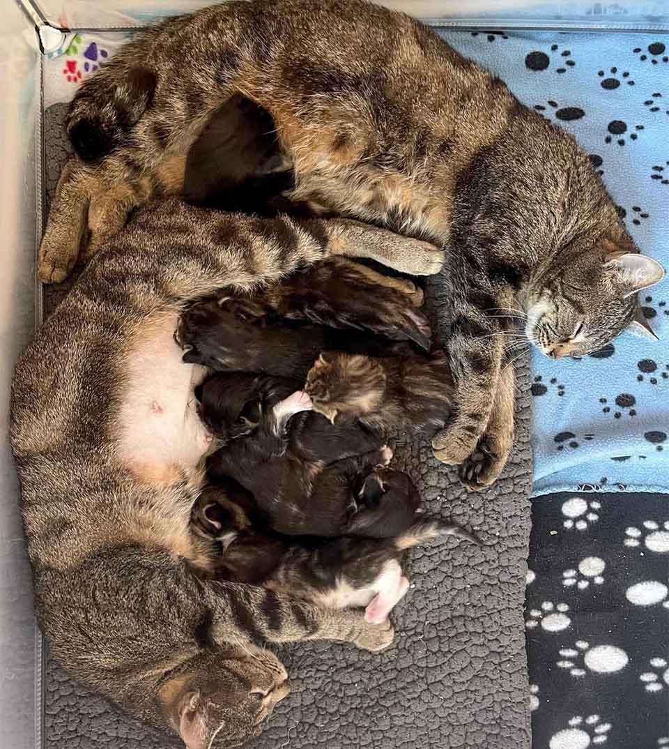 Gatas madres adoptivas