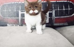 Gatito con bigote