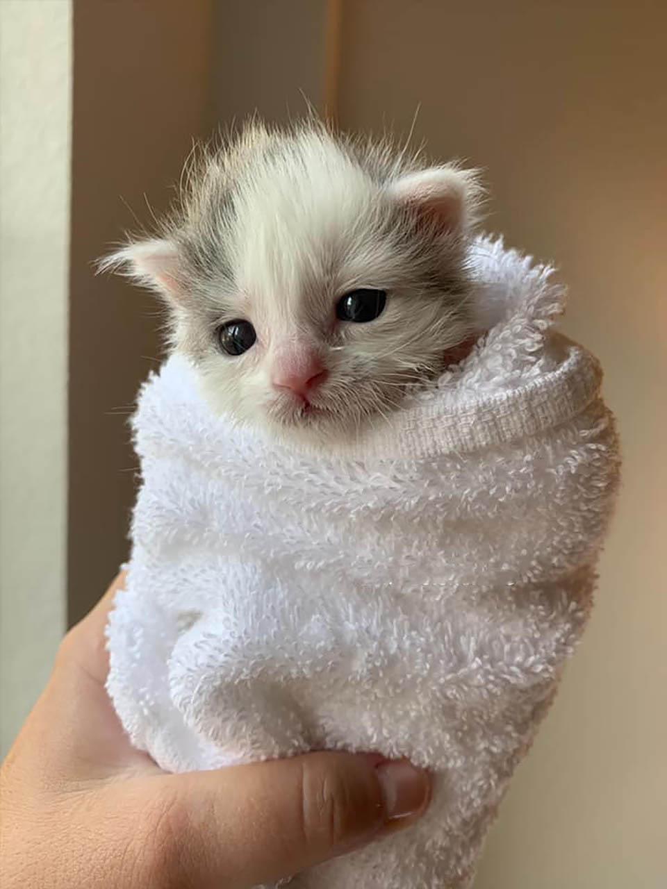Gatito encontrado en un patio muestra su espíritu de lucha