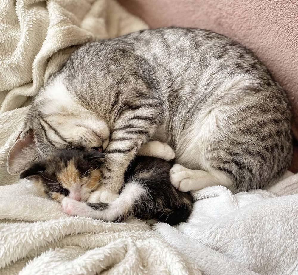 Gatitos toman una siesta