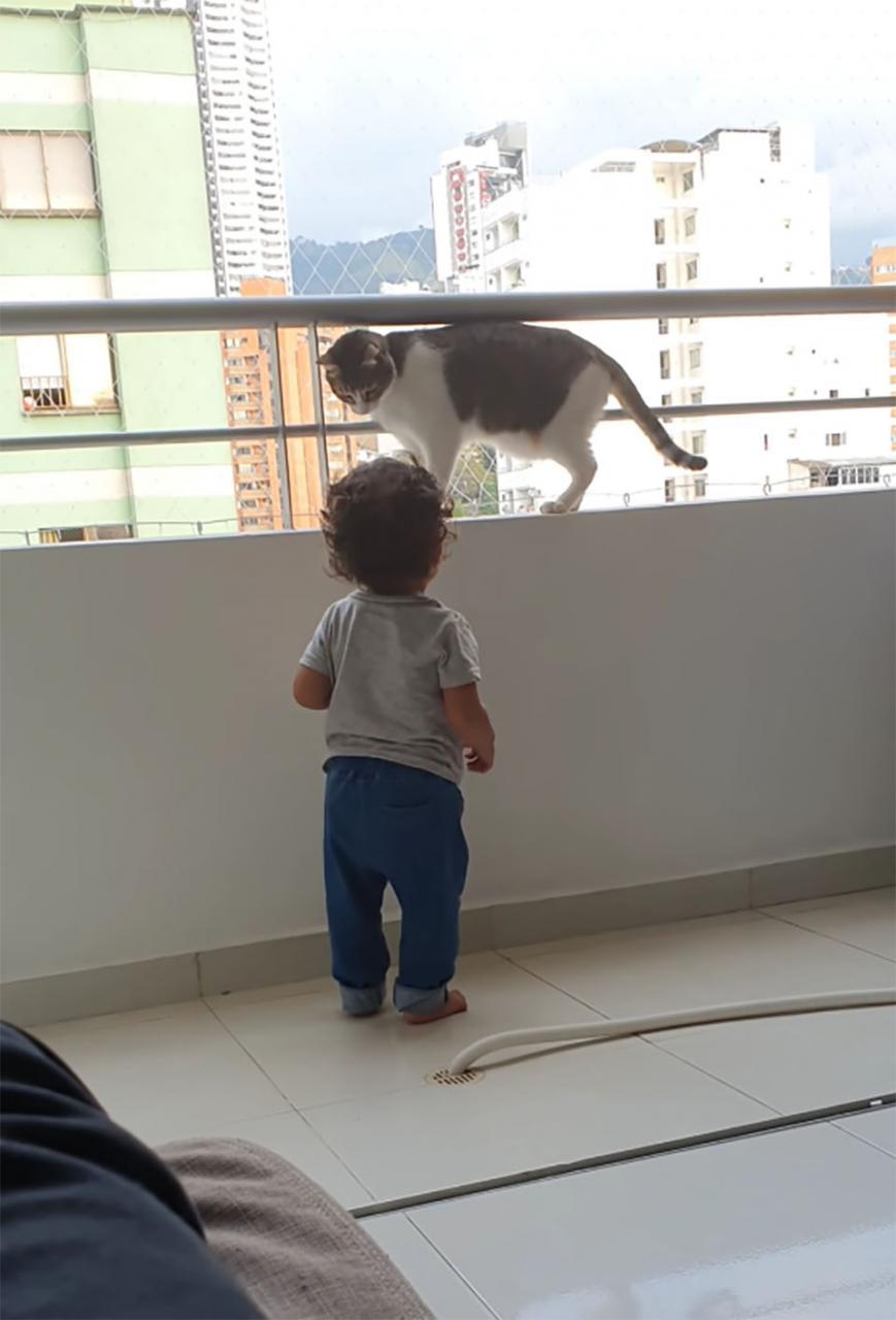 Gato héroe protege a niño