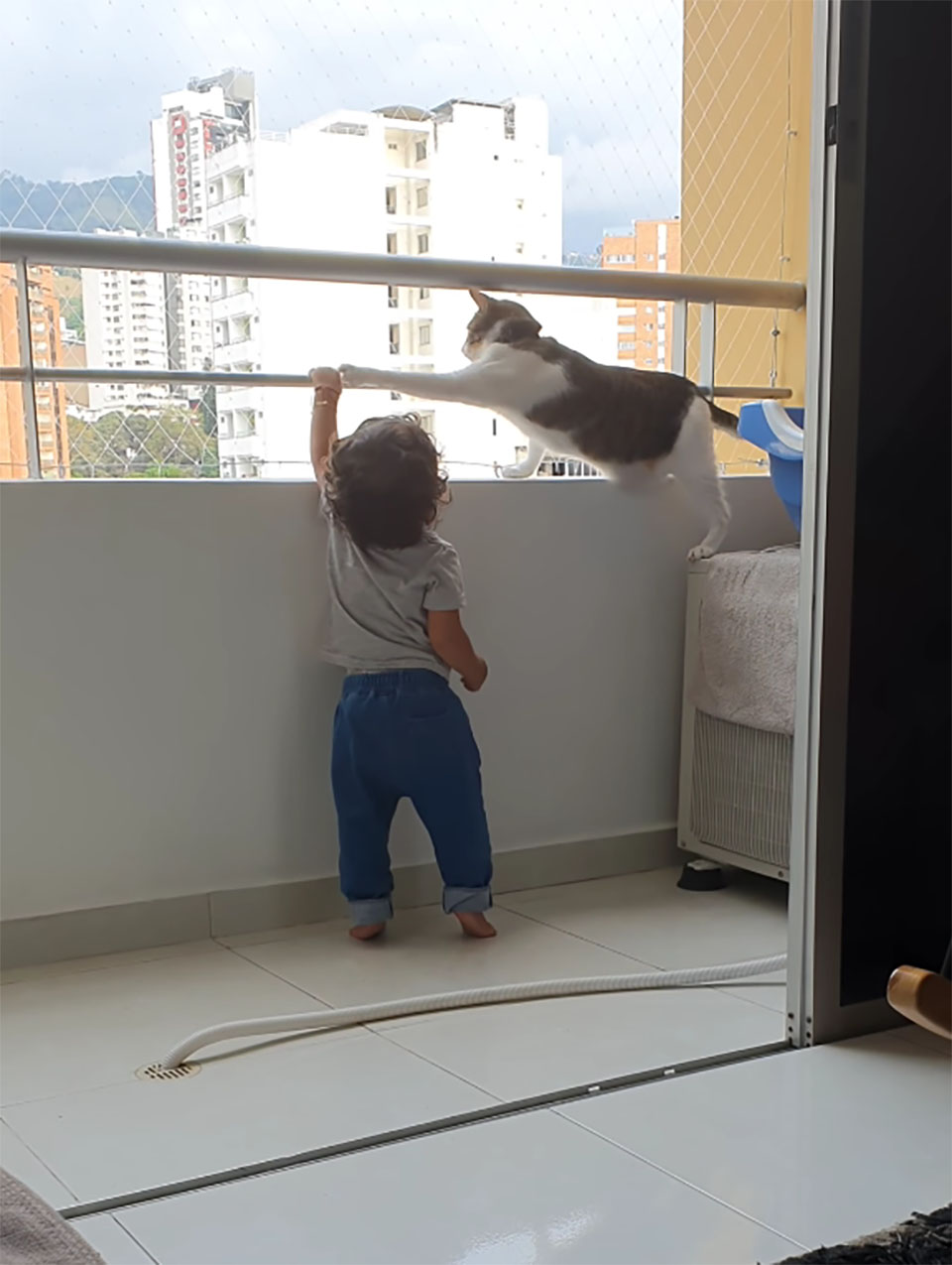 Gato protege a su hermanito