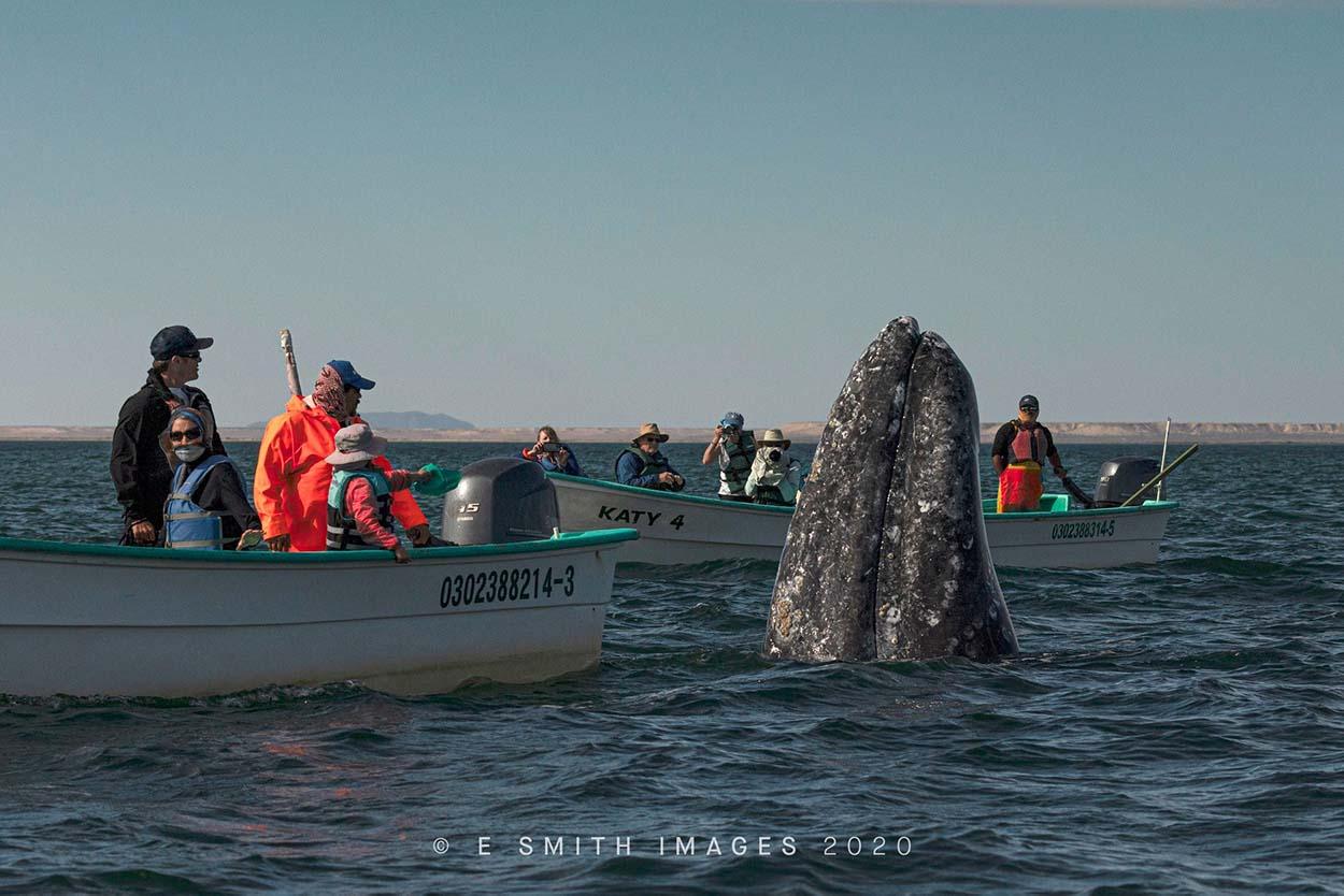 Turistas observan ballenas
