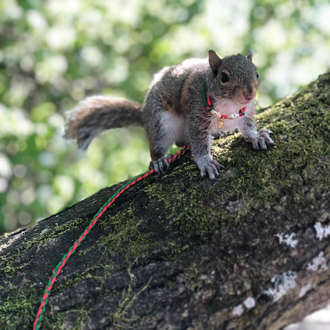 Adorable ardilla en un árbol