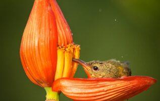 Ave toma néctar de flor