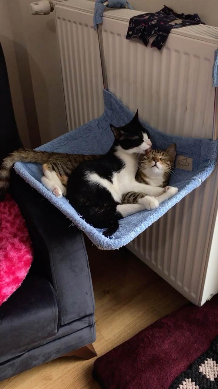 Gatita entra en la vida de una mujer con sus gatitos