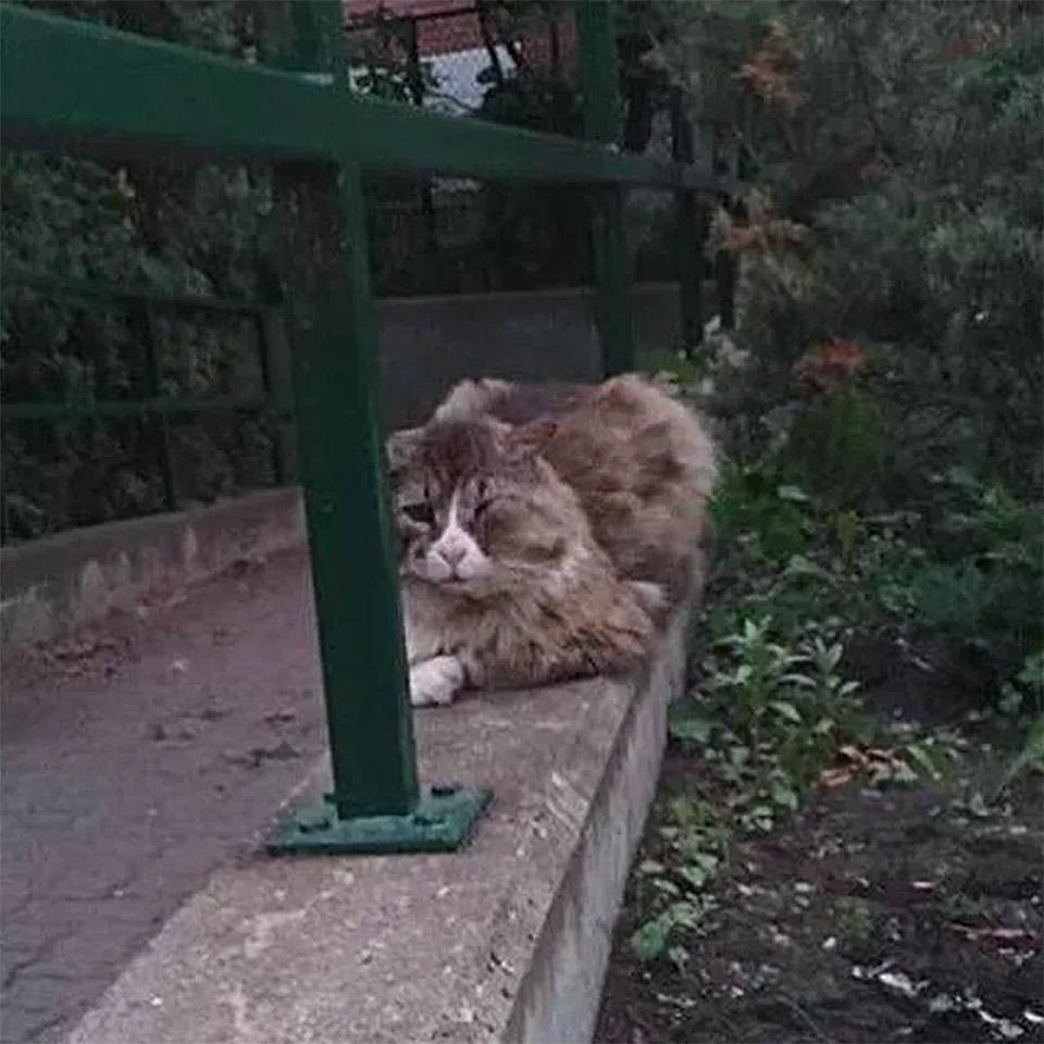 Gato que vivió en calle