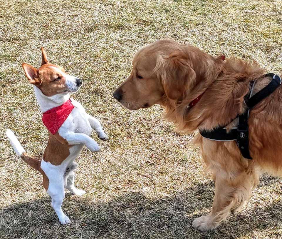 Gucio y perrito héroe