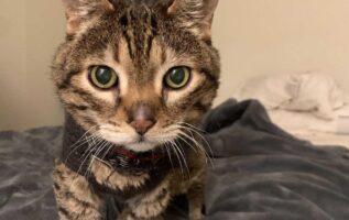 Hermoso gato de 18 años