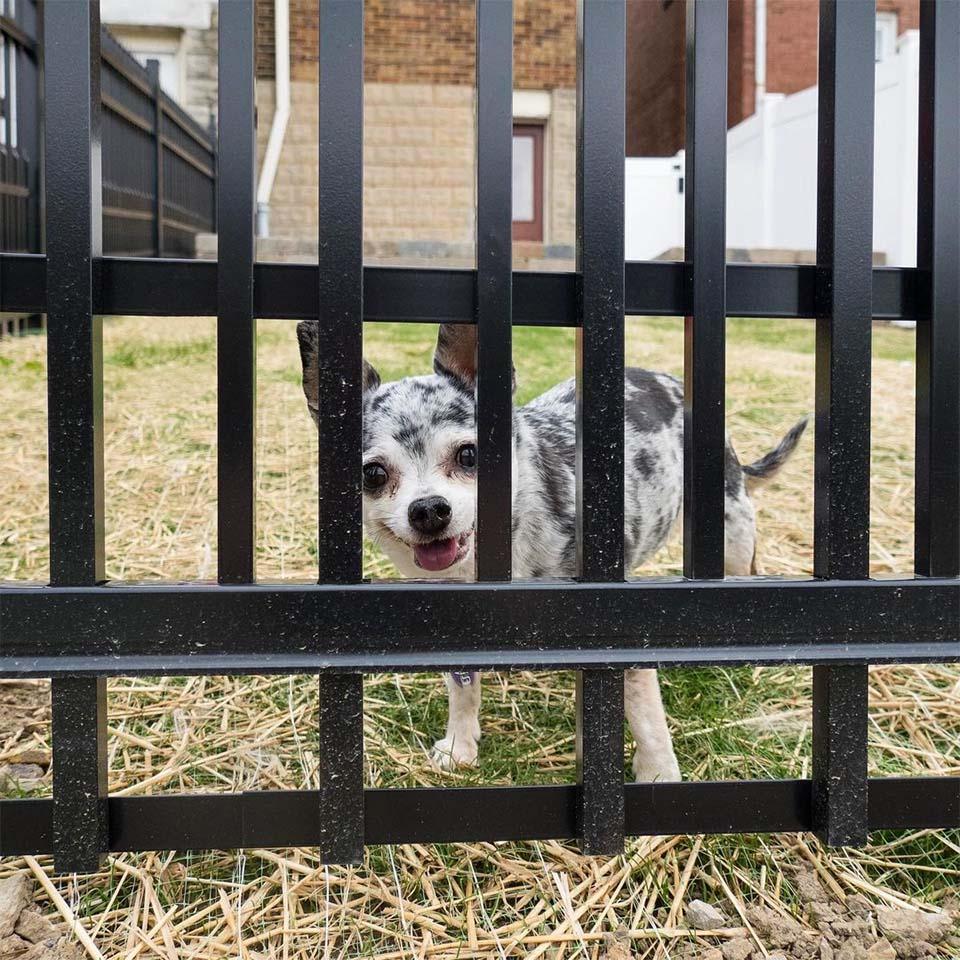 Lu en la cerca