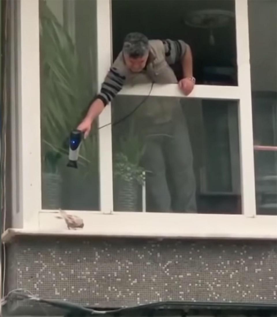 Pequeña paloma temblando