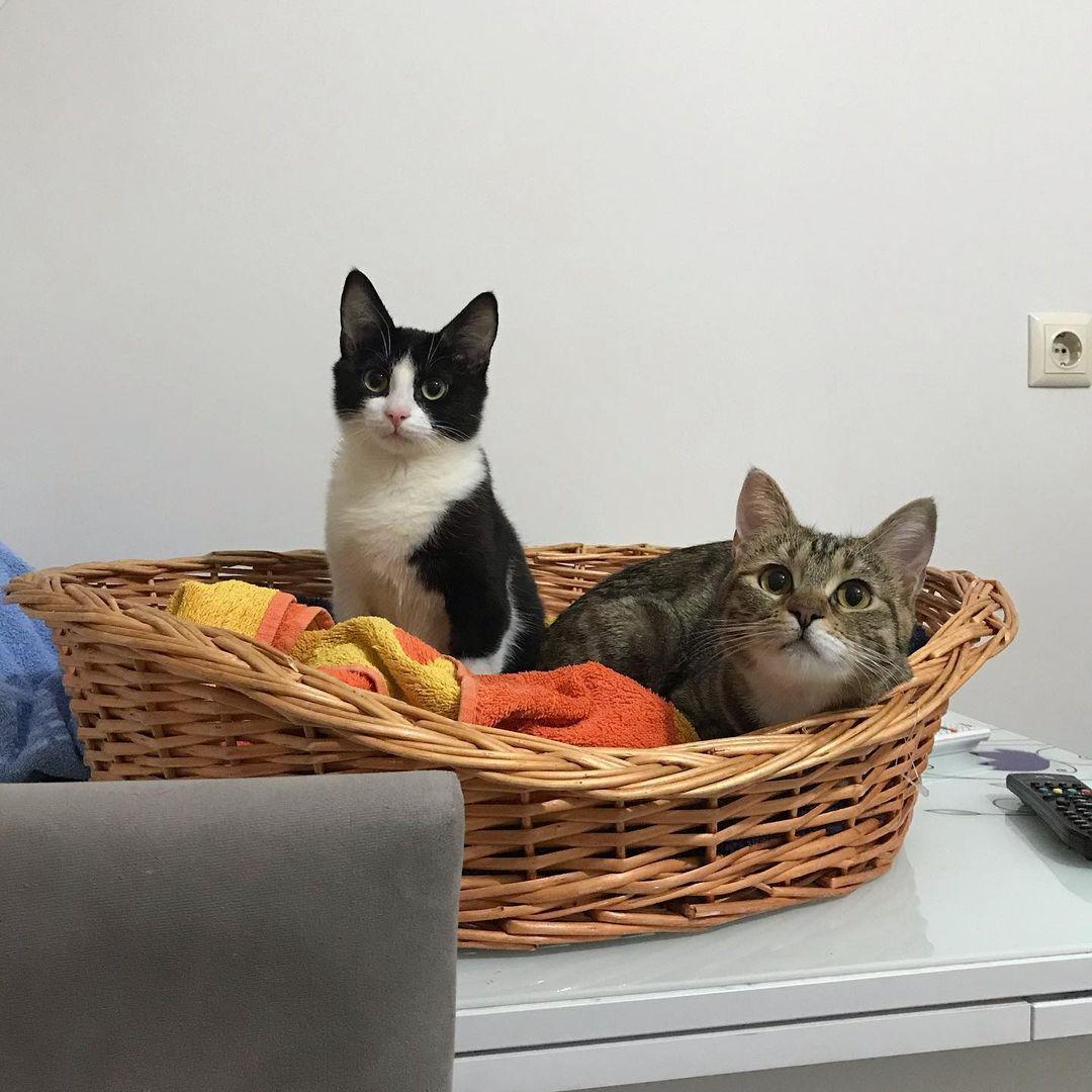 gatitos en una canasta